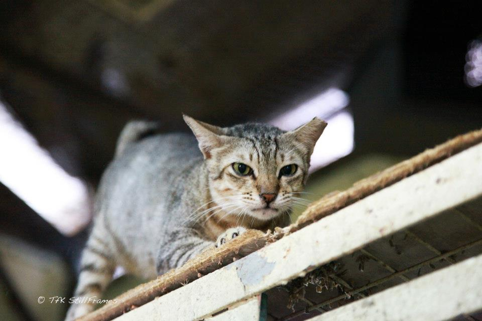 Old Wing Cat 19-04-2013 03