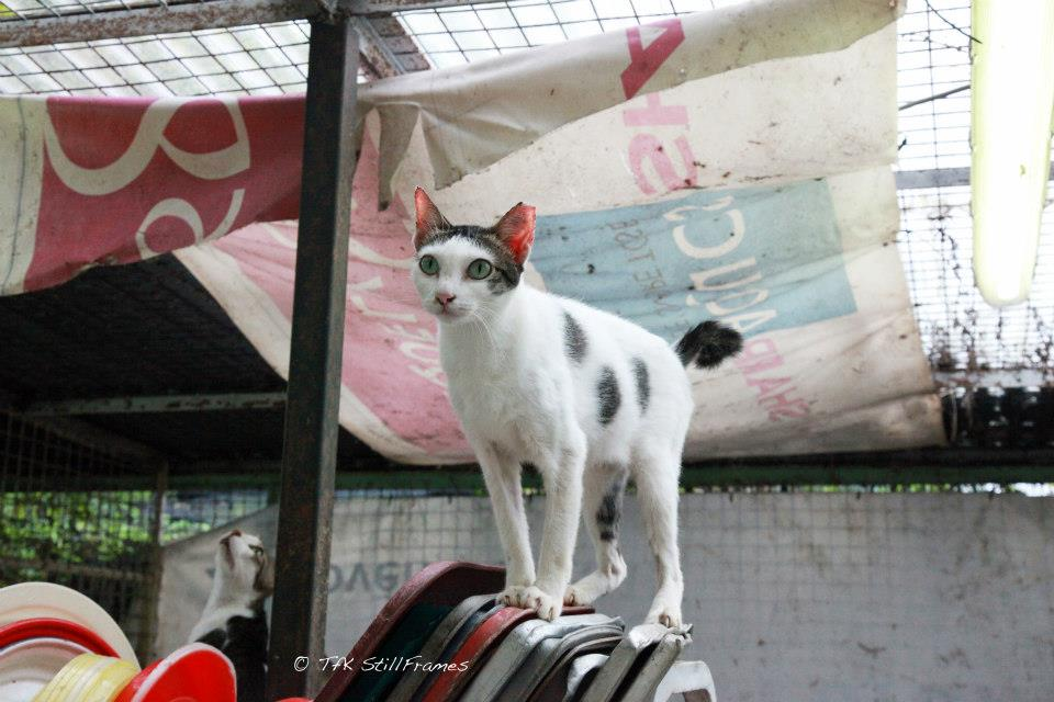 Old Wing Cat 19-04-2013 05
