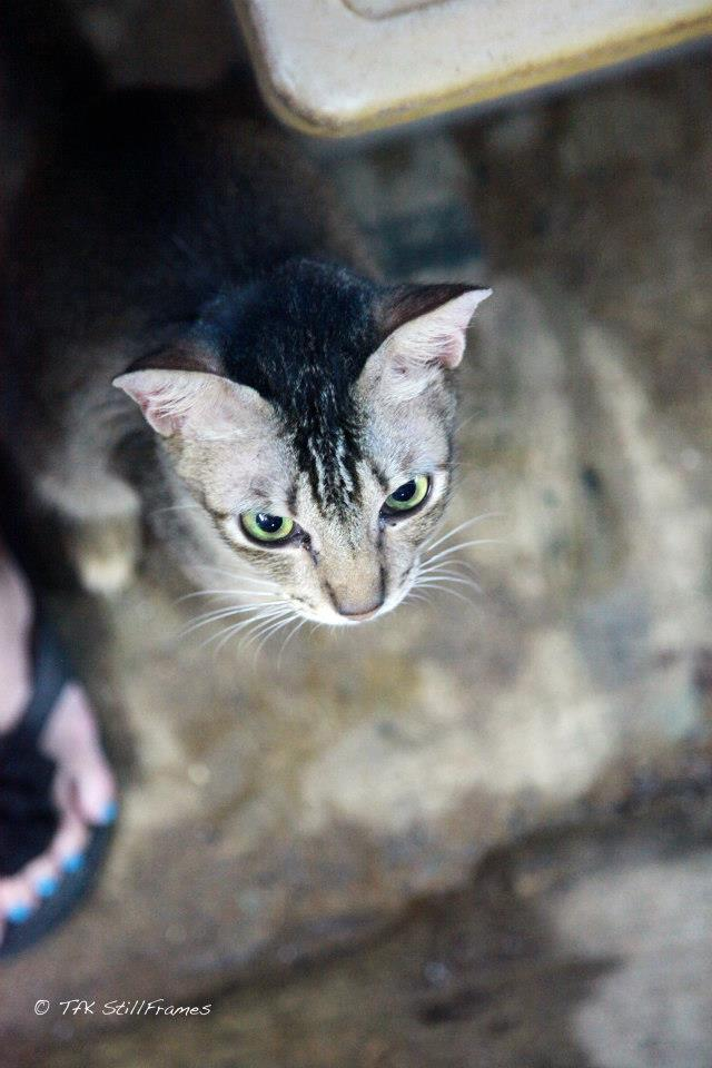 Old Wing Cat 19-04-2013 16