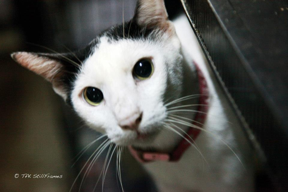 Old Wing Cat 19-04-2013 21
