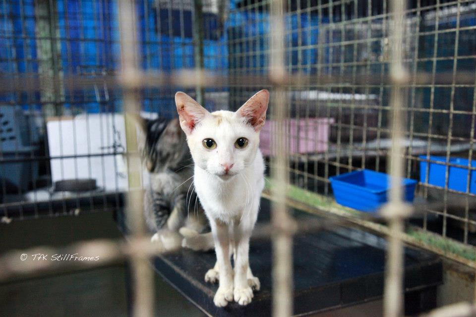 Old Wing Cat 19-04-2013 29