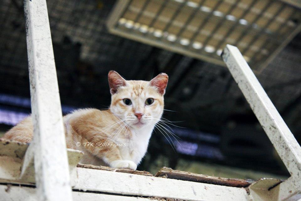 Old Wing Cat 19-04-2013 34