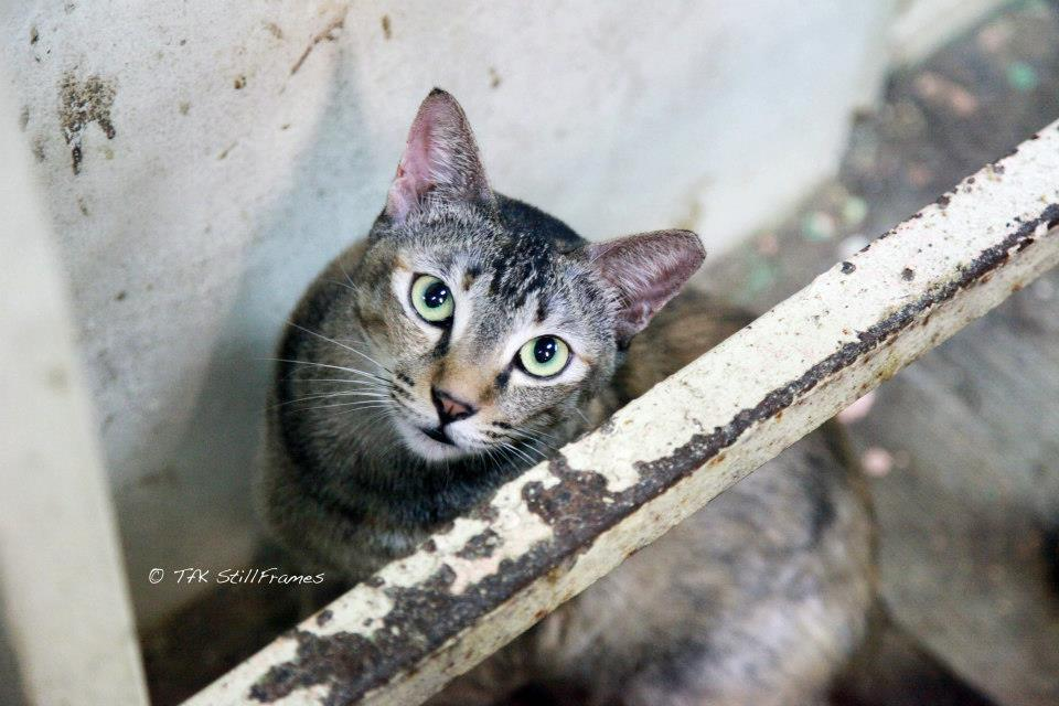 Old Wing Cat 19-04-2013 35