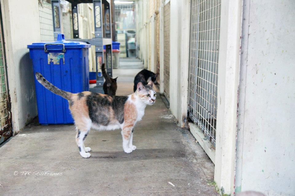 Old Wing Cat 19-04-2013 39