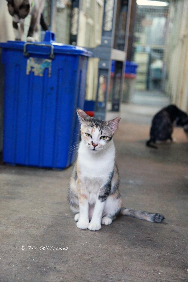 Old Wing Cat 19-04-2013 40