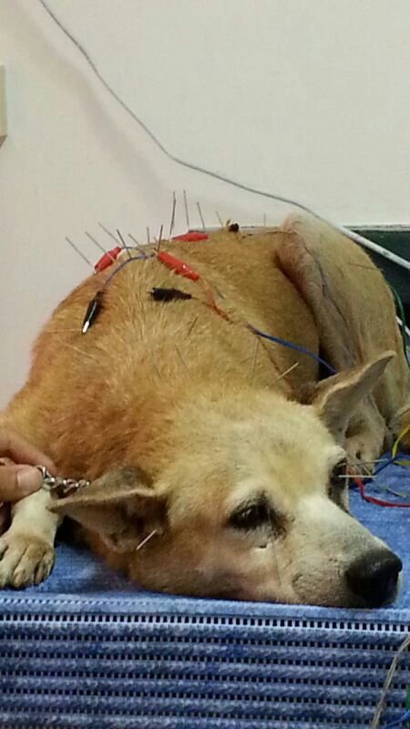 Wan-Wan's 2nd Acupuncture