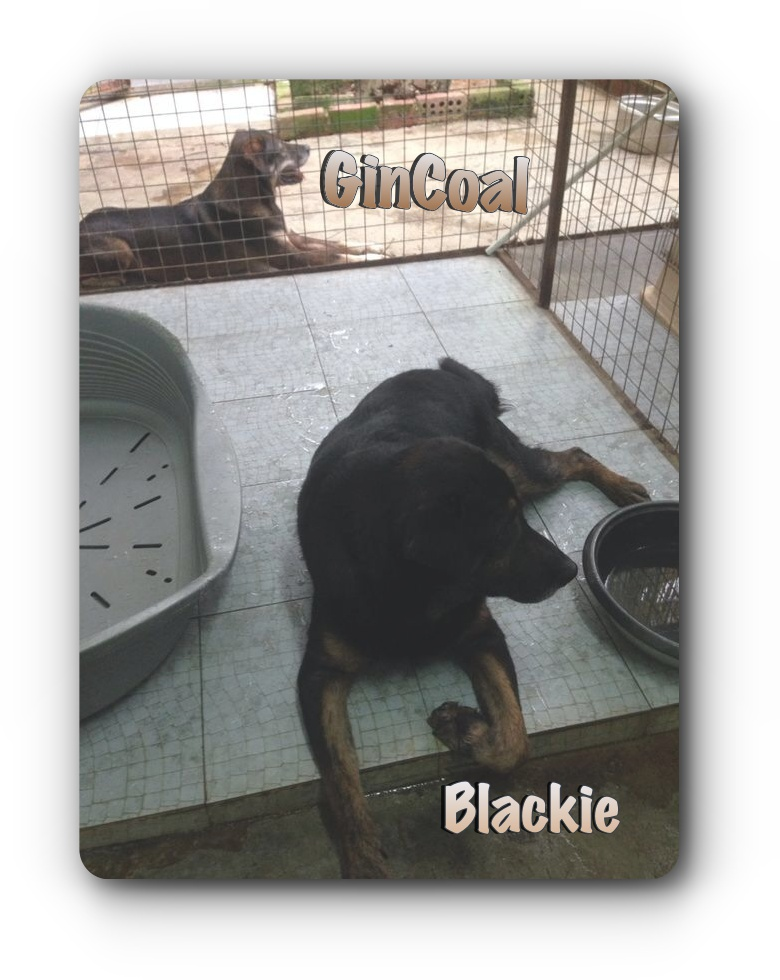 Blackie and Gincoal 04-08-2014