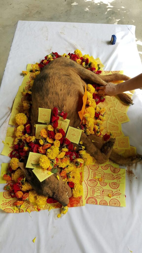 AVA-Blackie's Cremation at Mobile Pet Cremation on 13th January 2016 at 1.30pm