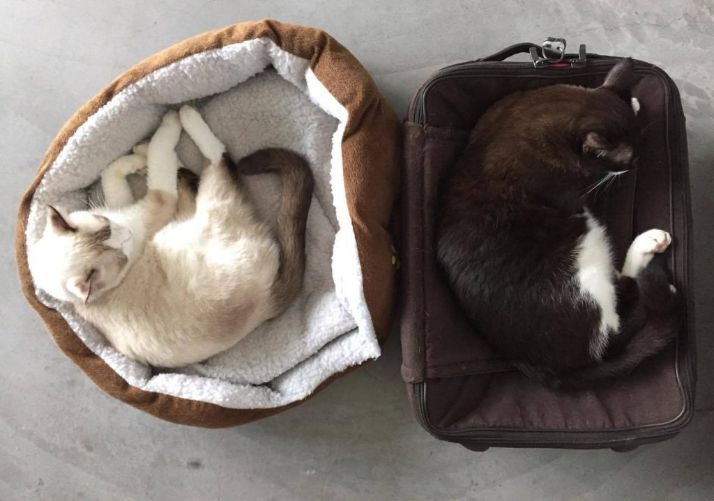 """Latest update from adopter of #smurfadopted (on the left) """"Smurf doing great. Very chill, talk more often to us these days. Recently made enemies with the DVD player tray."""""""