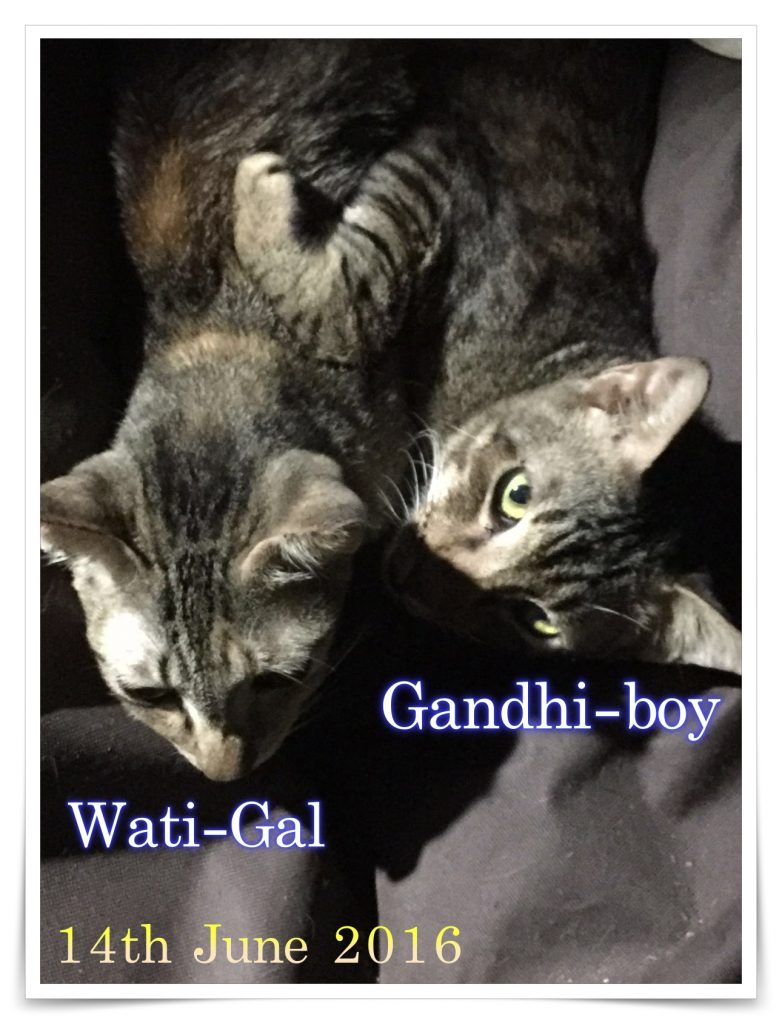 Wati-Gal and Gandhi-Boy on 14-07-2016