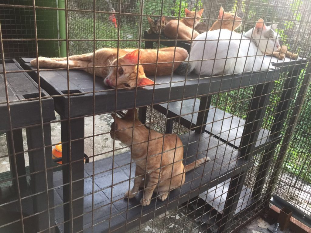 cluster-of-cats-2016-09-29-at-5-54-37-pm