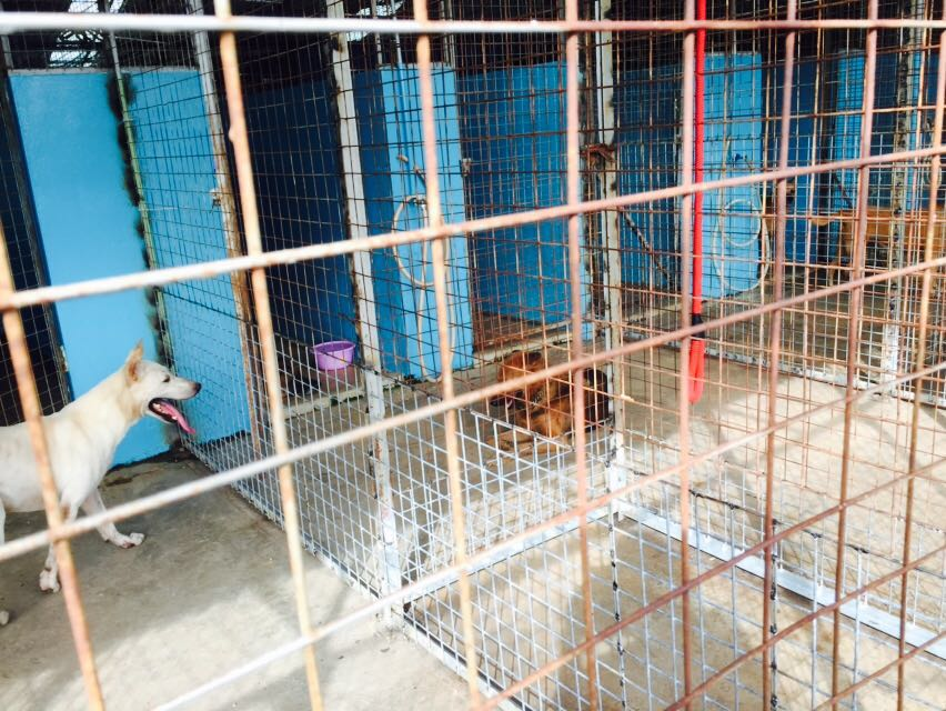 "3rd December 2016 SY updates, ""All of the doggies started quarreling because we removed the torn and discolored pieces of polycarbonate-boards."" #renovationmcds"